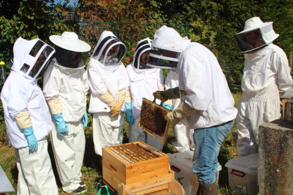 Animation autour d'une ruche